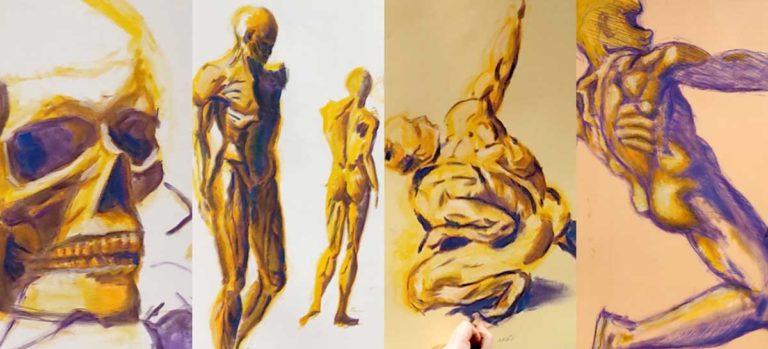 Modèle vivant - Anatomie